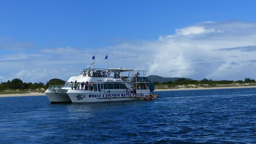 Following Dolphins and Camels in One Day with Colourful Trips in Port Stephens // Sponsored