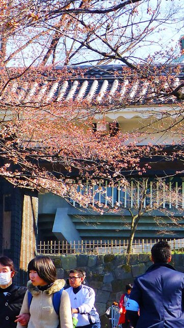Best Cherry Blossom Watching Spots in Tokyo