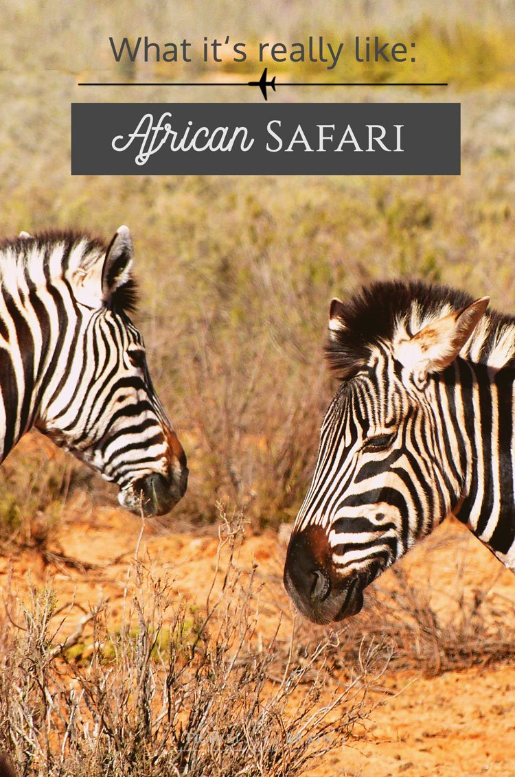 What an African Safari with the Big 5 Is Really Like // Sponsored
