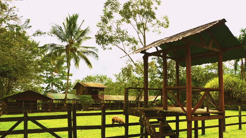 Chachagua Rainforest Hotel