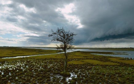 Sometimes you are alone like this tree during a storm. You need a backup plan!