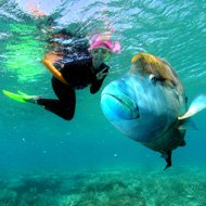 Solo travels around the world ideas - Great Barrier Reef