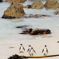Solo travel around the world ideas - penguins