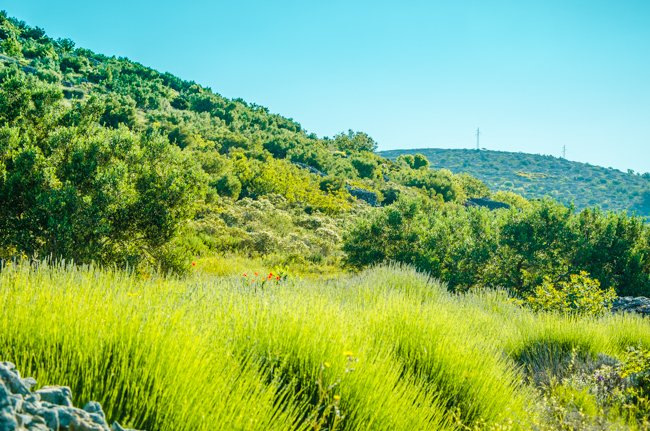 How (Not) to See Hvar's Lavender Fields - A Guide