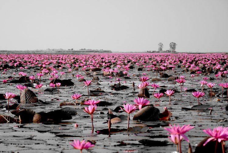 Udon Thani Day Trips for The Photographer In You