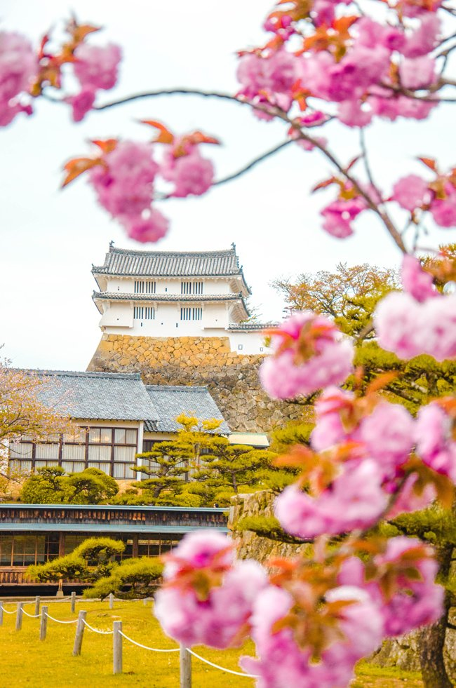 Epic Destinations to Explore with a 4 Day JR Kansai Pass