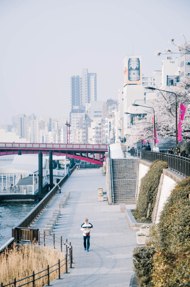 What to Do in Tokyo in 5 Days – Ideal Tokyo Itinerary