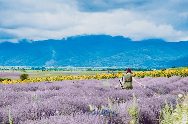 Where to Find Stunning Lavender Fields in Bulgaria