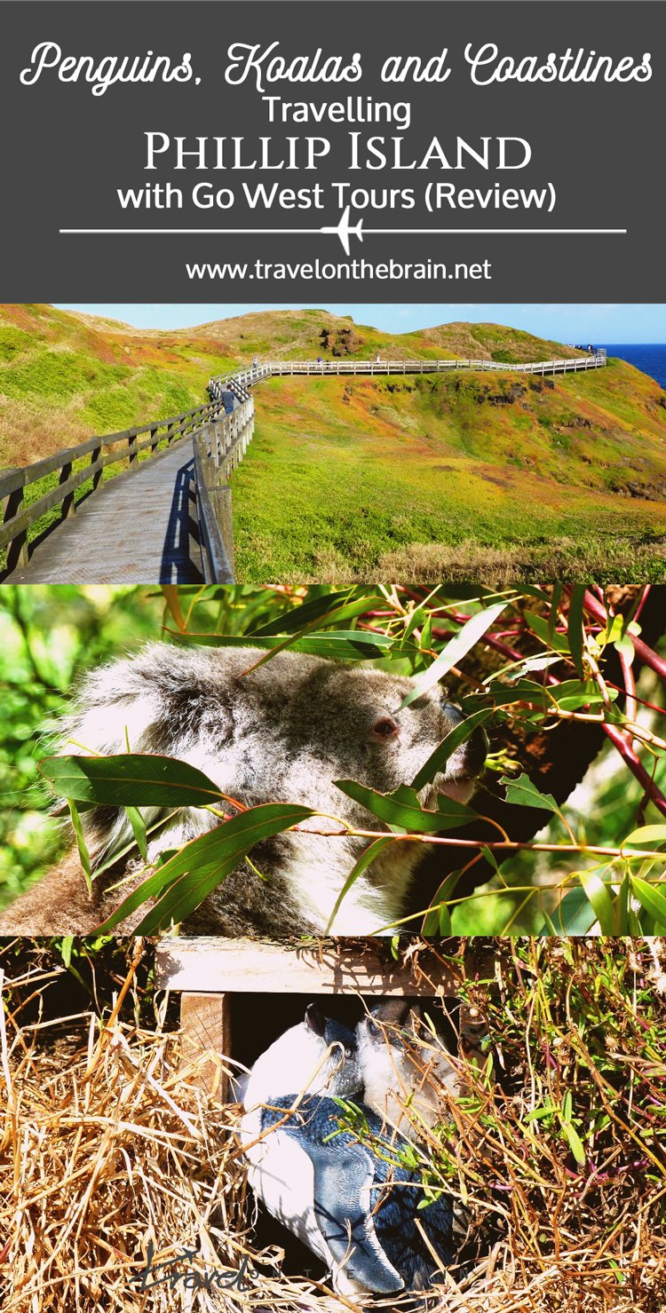 Penguins, Koalas and Coastlines – Travelling Phillip Island with Go West Tours // Sponsored