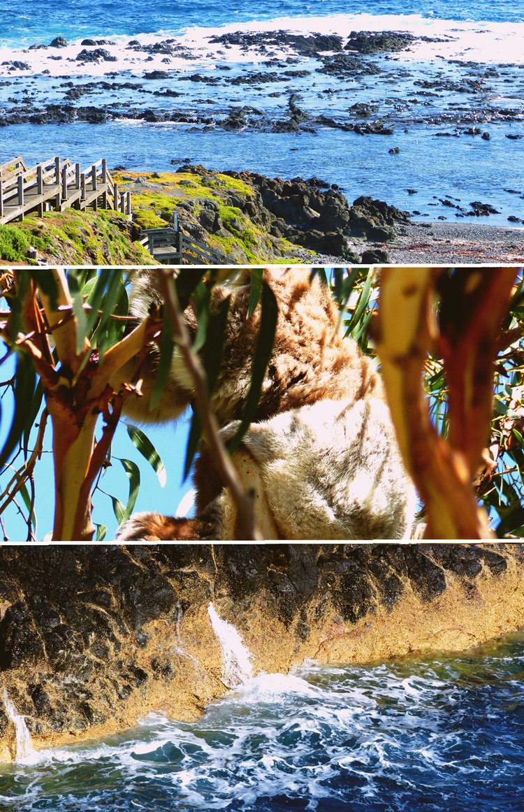 Penguins, Koalas and Coastlines – Travelling Phillip Island with Go West Tours - sponsored review