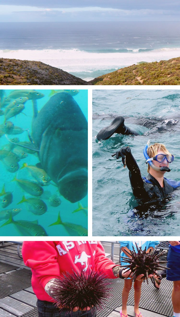 Where to Swim withGiant Tuna on my #sponsored Nullarbor Traveller Tour