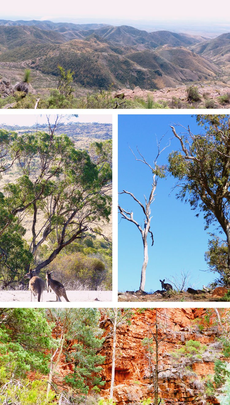 Love the Flinders Ranges - they are one stunning place!