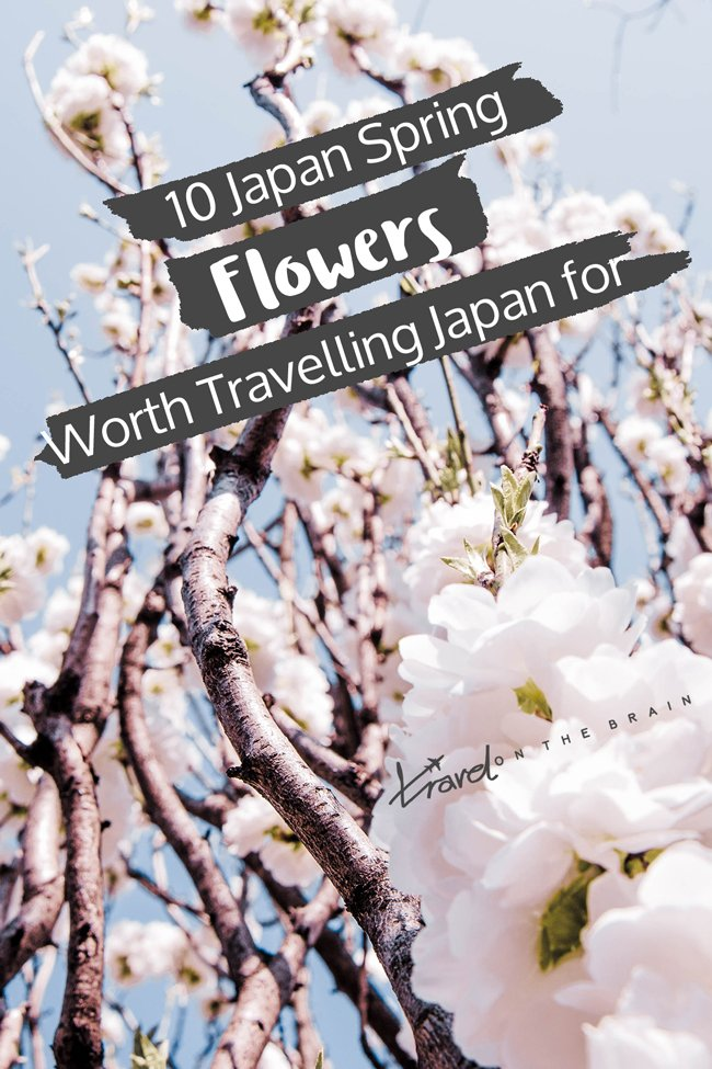 10 Japan Spring Flowers Worth Travelling Japan for
