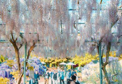 10 Japan Spring Flowers Worth Travelling Japan for