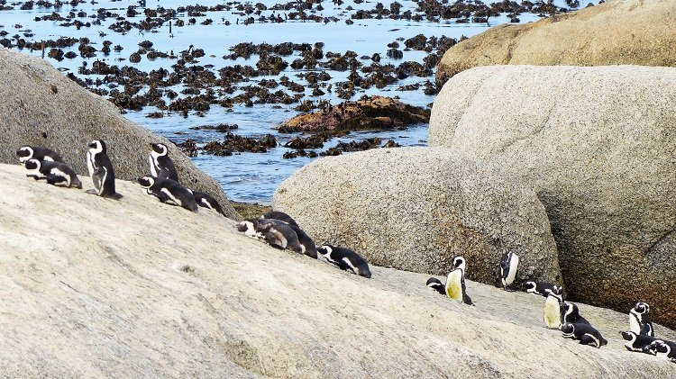 A Cape Town Tour you cannot miss #ad