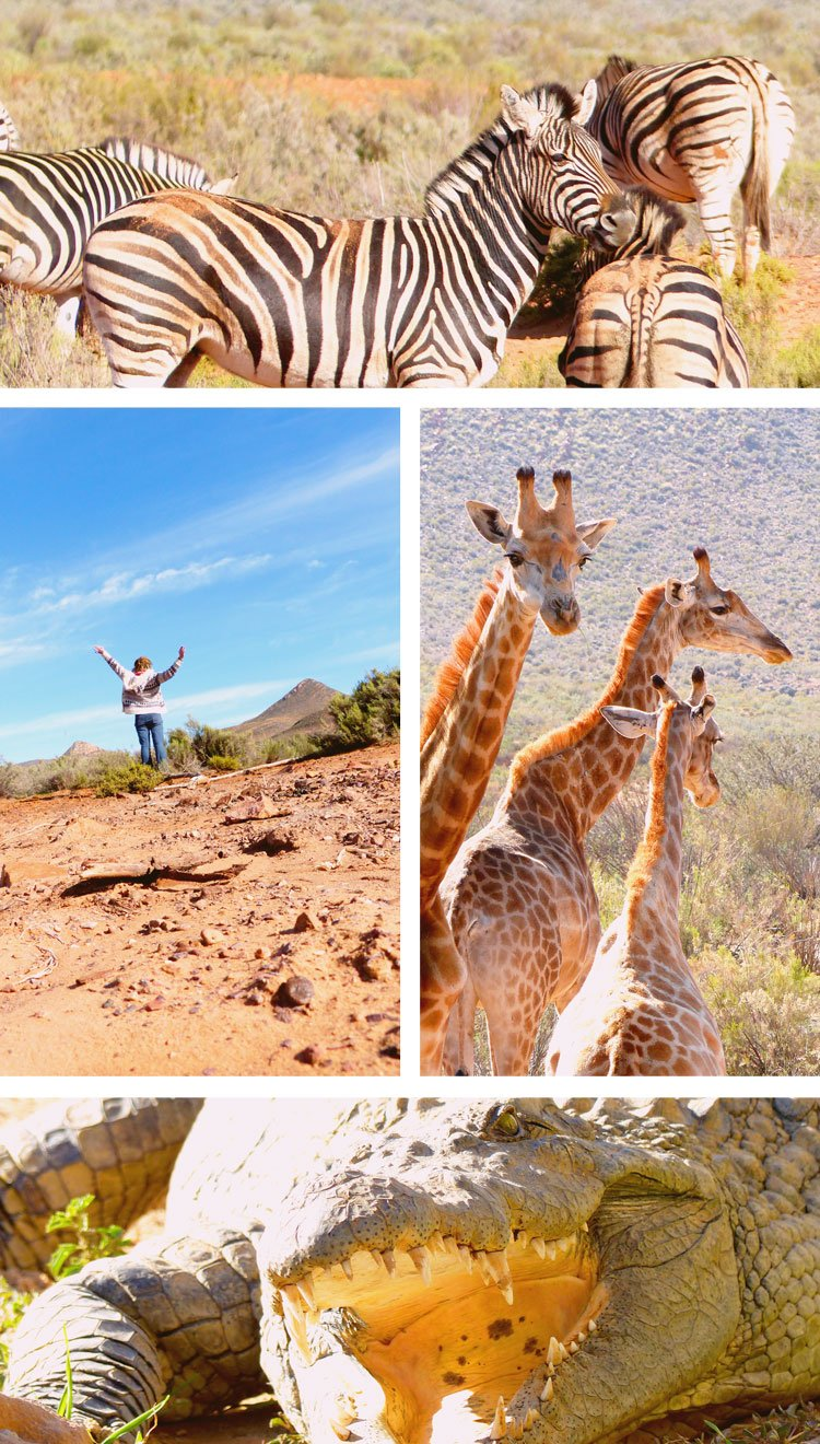 What an African Safari with the Big 5 Is Really Like