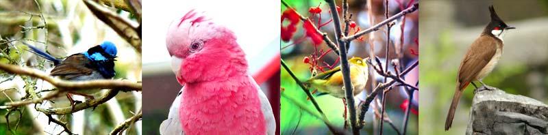 travelonthebrain-birthday-birds