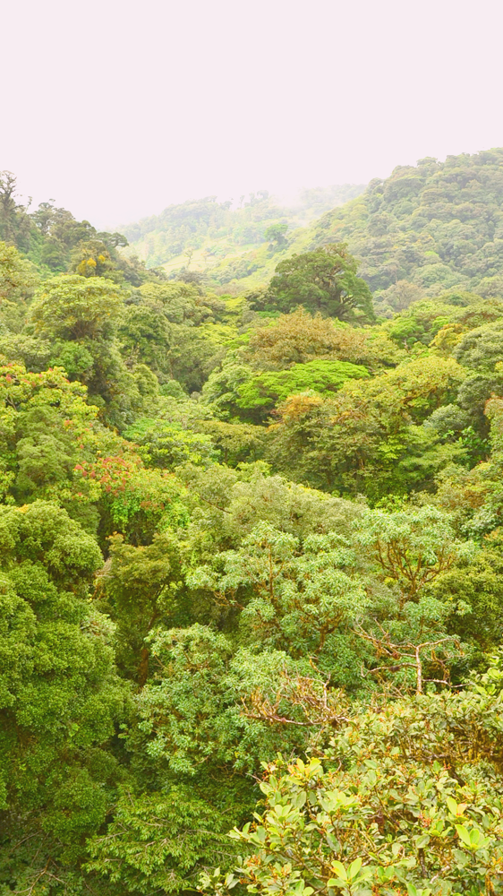 Anywhere Costa Rica Trip