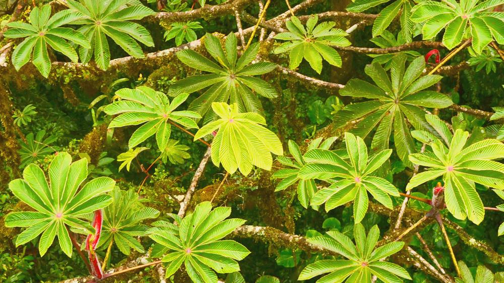 Costa Rica Clouod Forest