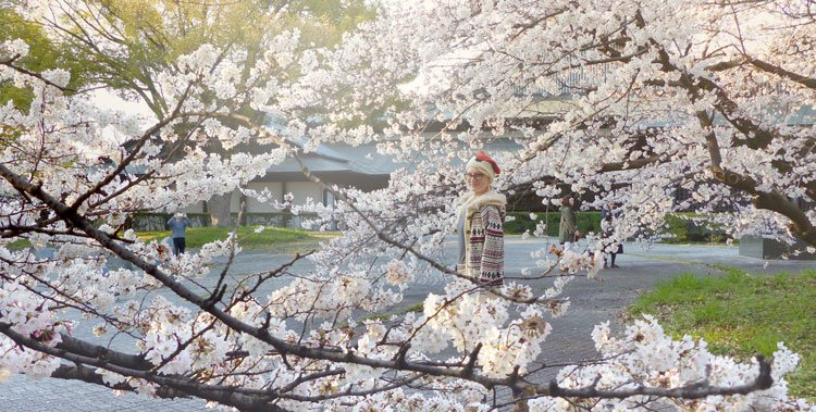 Jawdropping Cherry Blossom Parks in Nagoya
