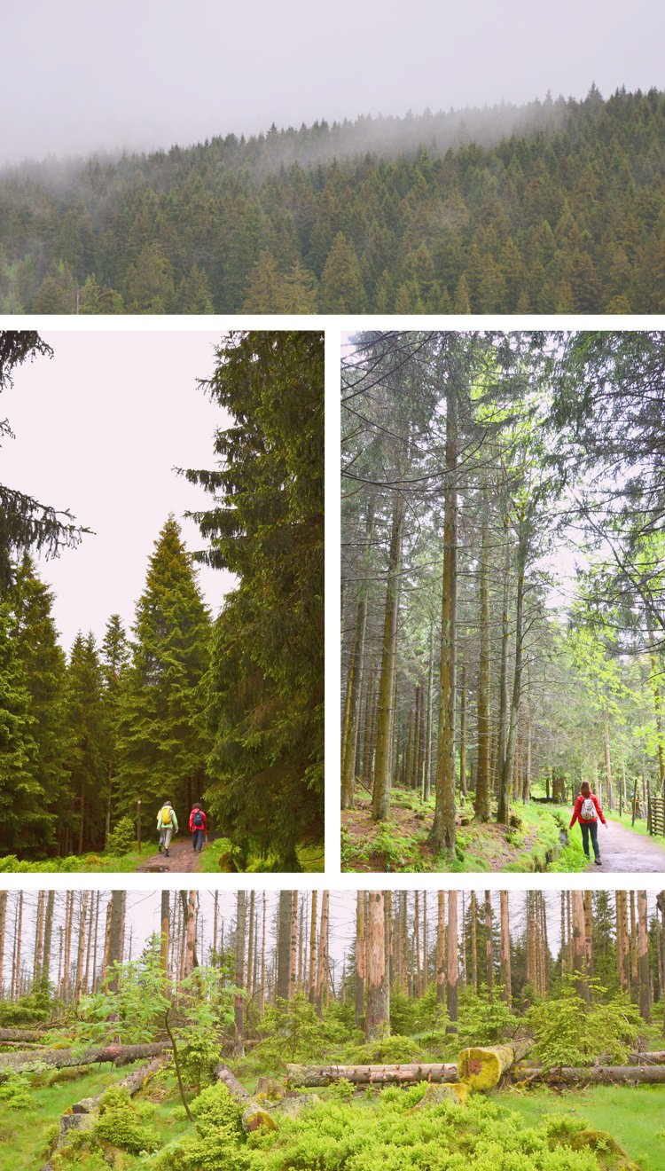 Don't miss these outdoor adventures in the Harz