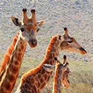 Solo travel around the world ideas - safari