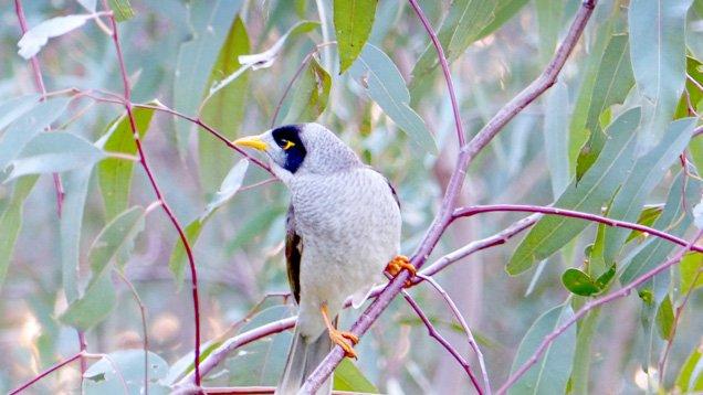 The Danger in Australia's Backyards Is Real (True Story) - a bird
