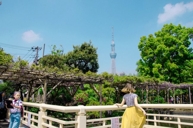 My Nomadic Life in South East Asia - the great Skytree tower in Tokyo