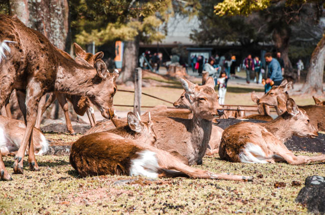 What to Do on a Nara Day Trip