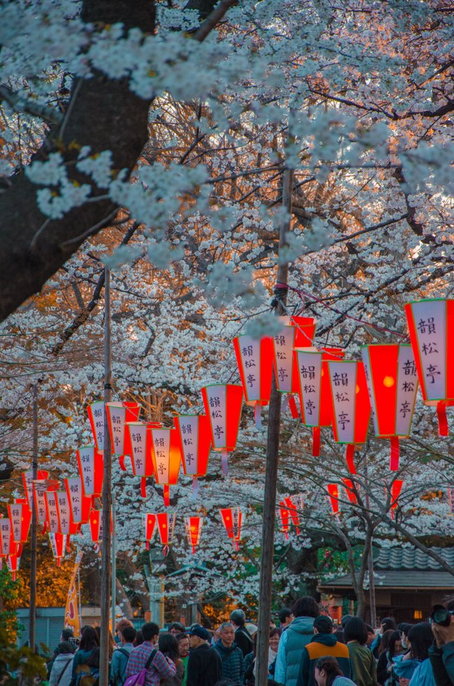 100 Things to See & Places to Visit in Tokyo