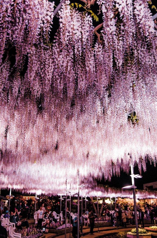 20 Photos of Japan that Will Make You Get on a Plane