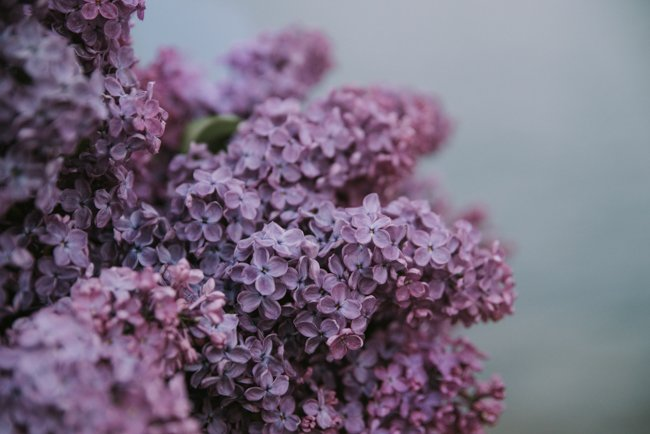 10 Japan Spring Flowers Worth Travelling Japan for - lilac